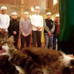 Catstantinople: Imam welcomes stray cats into Mosque to keep them warm and safe