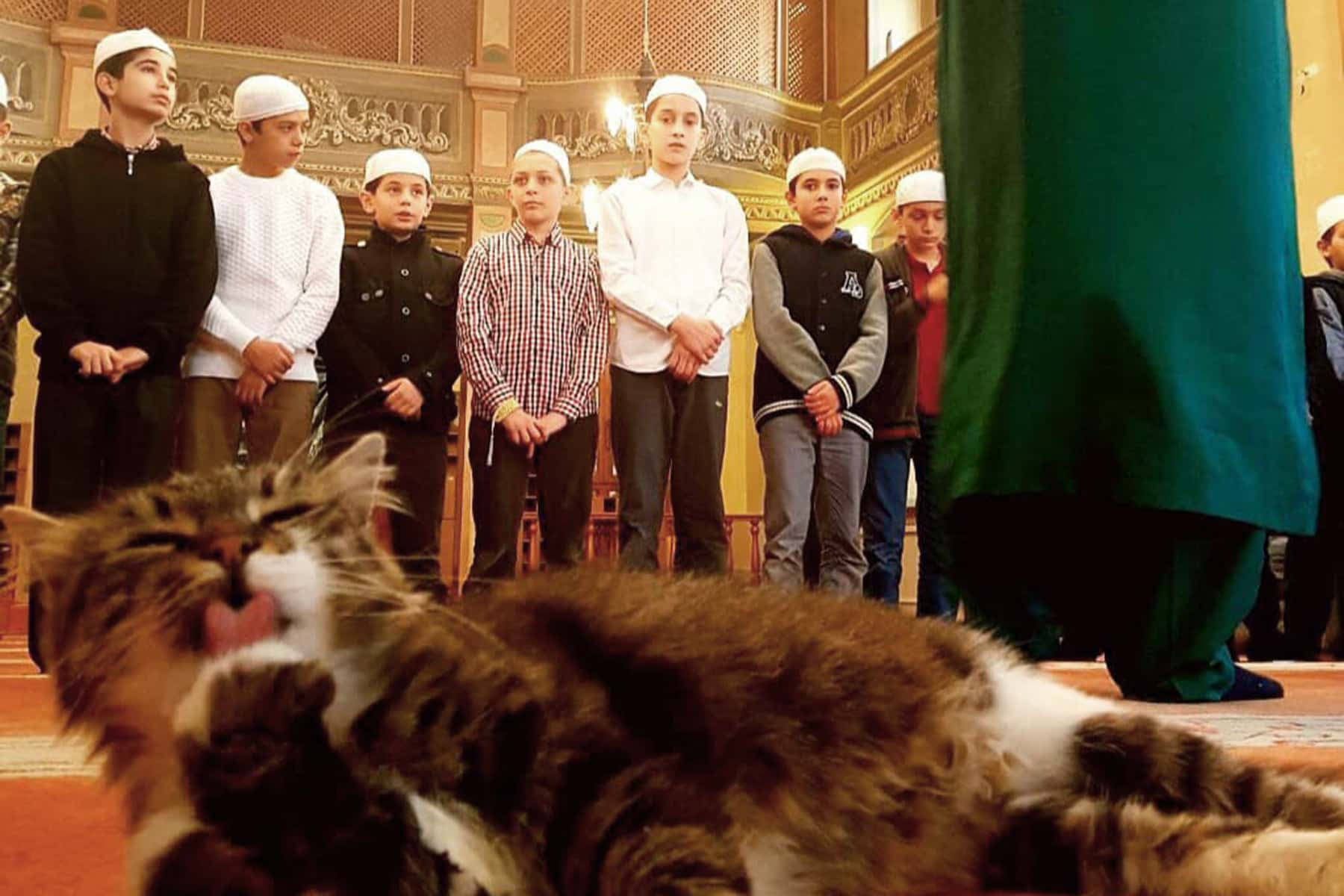 Catstantinople: Imam welcomes stray cats into Mosque to keep